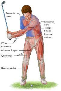 Win Golf anatomy ebook